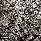 Abstract Trees by yurix