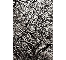 Abstract Trees Photographic Print