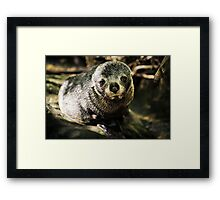Cute Seal Pup Framed Print
