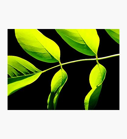 Lime Green on Black Photographic Print