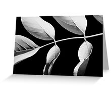 Robinia in Black & White Greeting Card