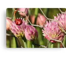 Berry Flowers and Fence Canvas Print