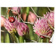 Berry Flowers and Fence Poster