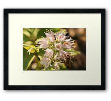 Flower Competition Framed Print