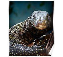 A Crocodile Monitor Portrait Poster