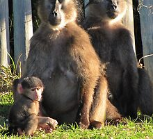 Baboons meditating while baby looks bored by Lee Jones