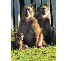Baboons meditating while baby looks bored Photographic Print