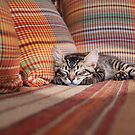 Cat Nap by Alan Robert Cooke