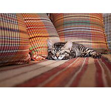 Cat Nap Photographic Print