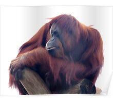Orangutan - Color Version Poster
