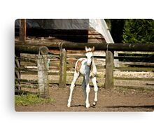 Painted filly Canvas Print
