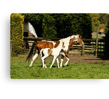 Painted Mother & Foal Canvas Print