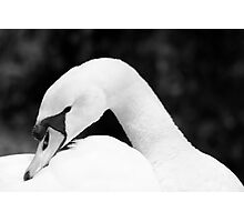 A black and white fine art photograph of a white mute swan Photographic Print