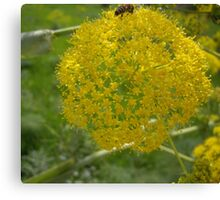 Giant Fennel & Bee Canvas Print