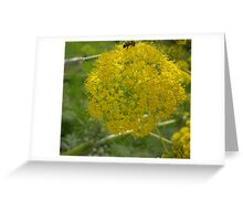 Giant Fennel & Bee Greeting Card