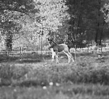 Belgian Draft Horse - Foal 2 by Cynthia Swinnen