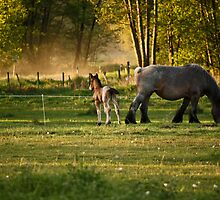 Belgian Draft Horse - Foal 3 by Cynthia Swinnen
