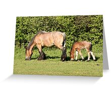 Belgian Draft Horse - New Arrivals 2 Greeting Card