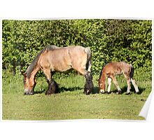 Belgian Draft Horse - New Arrivals 2 Poster