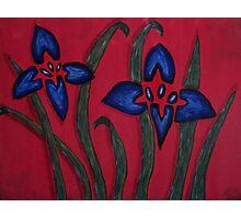 Irises on red Photographic Print