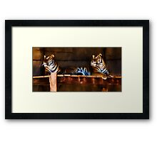 Lounging Tigers Framed Print