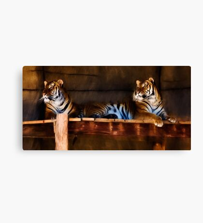 Lounging Tigers Canvas Print