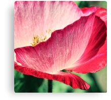 Red Poppy in Sunlight Canvas Print