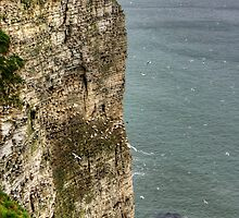 The cliffs at Bempton by Tom Gomez