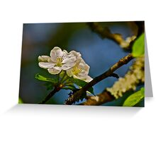 White Apple Blossoms 2 Greeting Card