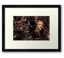 Dead Cent Framed Print