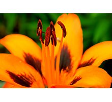 Orange Lily and the Dance Photographic Print