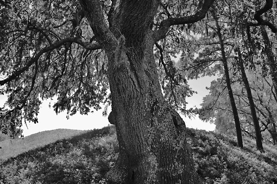 Tree of Life by Paulette1021