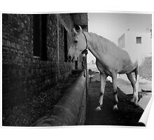 the White Horse of Amritsar Poster