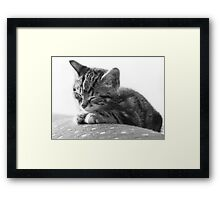 Sleeping Kitten (non-clothing products) Framed Print