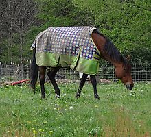 Grazing in Style by vigor