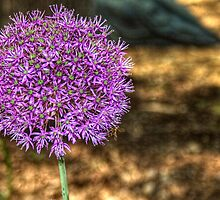 Purple Allium and Bee by Roger Passman