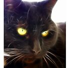 Black Cat by Chris Tait
