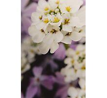 Flowers, Photographic Print