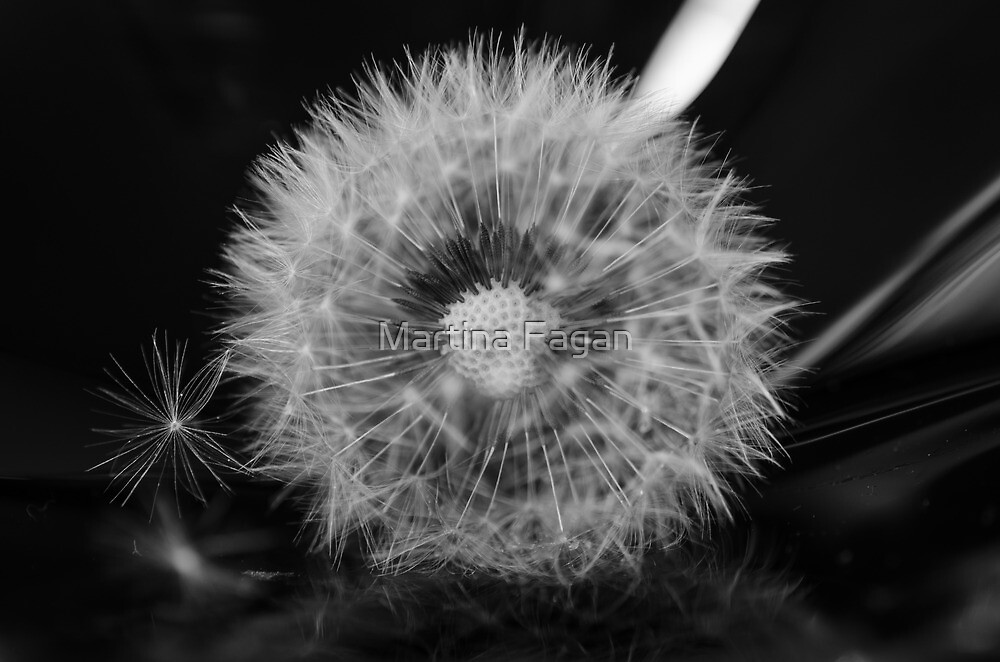 Gone to seed  by Martina Fagan