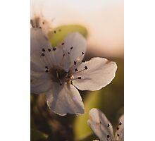 Sunset Flower Photographic Print