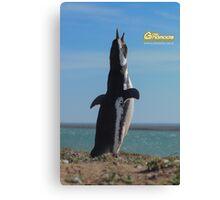 Penguin in Peninsula Valdes - Patagonia Argentina Canvas Print