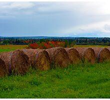 Hay Stacks in Fall by BrasdOrLife
