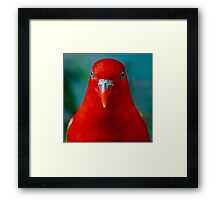 Chattering Lory II Framed Print