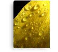 Rainy jewels  Canvas Print