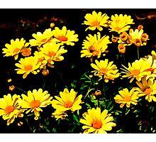 Floral Design 7 Photographic Print