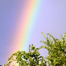 Rainbow on my trees from patio door. by EdsMum