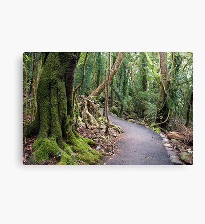 Gondwana Rainforest  Canvas Print