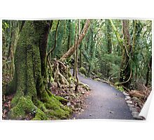 Gondwana Rainforest  Poster