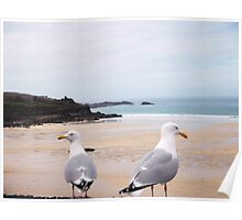 SEA GULLS,ST IVES,CORNWALL. Poster