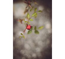 Solitary Bloom Photographic Print